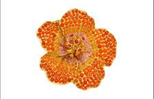 Paula Crevoshay, spilla a forma di fiore con zaffiri orange e gialli