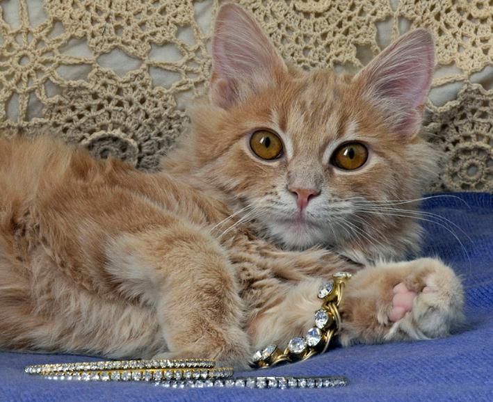 Gatto e gioielli, coppia perfetta