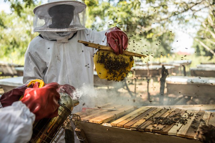 Progetto Heartbeat Honey