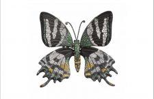 Spilla a forma di farfalla Teinopalpus Aureus